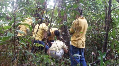 Students doing forestry